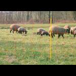 Rete elettrica per pecore - CLASSICNET
